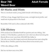 790 WEEVIL BEAR PAGE INFO 2012 BoBr iBOOK