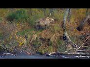 9 Oct 2020- 131 Walks Thru the Woods-2