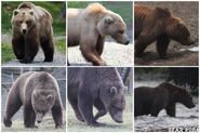 """284 """"Electra"""" photo collage by Kara Stenberg from Brooks Lodge's August 31, 2014 Facebook post"""