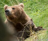 402 and 1 of 4 spring cubs July 2015 photo by ©Theresa Bielawski .01