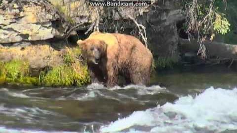 06.29.2016 - 755 Scare D Bear, 83 Wayne Brother video by Brenda D