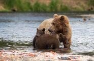 803 and 2 spring cubs July 17, 2020 photo by Lee Pastewka (aka RiverPA) .05