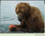16 CINNAMON PIC xxxx.xx.xx EATING FISH YEAR UNKNOWN in 2012 BoBr iBOOK 01