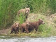 402 PIC 2018.07.20 HER 4 SPRING CUBS BY Valerie Van Griethuysen
