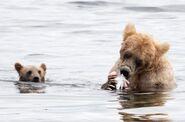 435 and spring cub Jul 17, 2020 photo by Lee Pastewka (aka RiverPA) .07