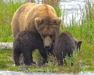 BEADNOSE 409 PIC 2016.07.21 10.53 w 2 SPRING CUBS 909 & 910 TRUMAN EVERTS POSTED 2020.02.02 09.23