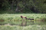 132 and 3 spring cubs July 2021 photo by Melissa Freels