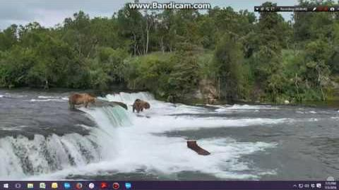 07.03.2016 - 755 Scare D Bear saves the day by Brenda D