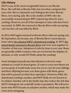 HOLLY 435 INFO 2017 BoBr PAGE 52 LIFE HISTORY ONLY