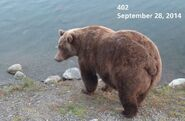 2014 FAT BEAR TUESDAY 2014.09.30 12.00 KNP&P FB POST 402 2014.09.28 PHOTO ONLY