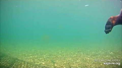 07.03.2018 - 435 Holly Swims Past the Underwater Cam by Brenda D
