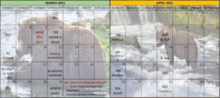 2021 BEAR A DAY CALENDAR w YEAR 02 MARCH & APRIL w MIKE FITZ DAY 2021.03.09 ADDED 2020.10.23 SNIP 01