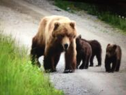 132 and 3 spring cubs June 26 2021 photo by April Peterson Naftali