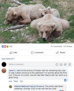 INFO BEARS SEEN 2018.05.20 or PRIOR 128 GRAZER w THEN 2.5 YO CUBS KNP&P 2018.05.21 06.31 FB POST w DATE OF PIC