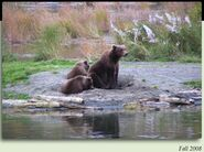 94 PIC 2008.xx.xx FALL 2008 w 3 SPIRNG CUBS 289 is 1 of 3 in 2012 BoBr iBOOK 02