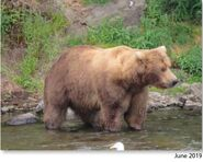 89 Backpack June 2019 NPS photo 2021 Bears of Brooks River book page 63 .02