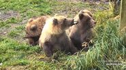 402 PIC 2018.10.08 4 SPRING CUBS JEGRABAU POSTED 2019.10.19 01