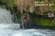 2014 FAT BEAR TUESDAY 2014.09.30 09.30 KNP&P FB POST 814 LURCH 2014.09.19 PHOTO ONLY