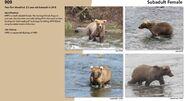 909 2019 Bear Book p 34