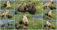 128 Grazer and 3 spring cubs 2016 snapshot collage by Xander-Sage-2