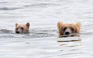 435 and spring cub Jul 17, 2020 photo by Lee Pastewka (aka RiverPA) .06