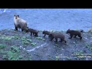 402 PIC 2018.xx.xx w 4 SPRING CUBS SUNNY