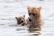 435 and spring cub Jul 17, 2020 photo by Lee Pastewka (aka RiverPA) .05
