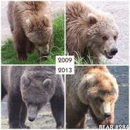 """284 """"Electra"""" 2009-2013 photo collage by Kara Stenberg from Brooks Lodge's September 1, 2014 Facebook post"""
