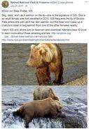 505 INFO 2015.07.28 KNP&P FB POST BEARCAM BEAR PROFILE POST w PHOTOS