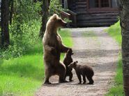 128 Grazer and 2 spring cubs June 18, 2020 NPS photo by Ranger Tammy Carmack .01