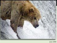 6 HEADBOB - BULLET PIC 2008.06.xx in 2012 BoBr iBOOK 01