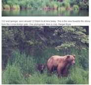 RANGER RUSS COMMENT 2018.07.05 13.06 re 12.08 PHOTOS OF 132 w REMAINING SPRING CUB 02