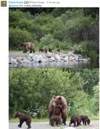 RANGER RUSS COMMENT 2018.07.15 13.56 w 2 PHOTOS OF 402 w 4 SPRING CUBS TAKEN 2018.07.14
