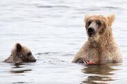 435 and spring cub Jul 17, 2020 photo by Lee Pastewka (aka RiverPA) .08