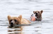 435 and spring cub Jul 17, 2020 photo by Lee Pastewka (aka RiverPA) .03