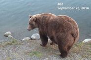 2014 FAT BEAR TUESDAY 2014.09.30 10.00 KNP&P FB POST 402 2014.09.28 PHOTO ONLY