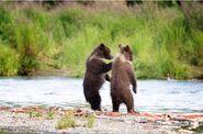 803's 2 spring cubs July 17, 2020 photo by Lee Pastewka (aka RiverPA) .07