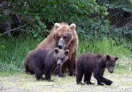 "284 ""Electra"" and 2 spring cubs July 17, 2020 photo by Lee Pastewka (aka RiverPA)"