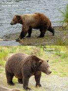 2014 FAT BEAR TUESDAY 2014.09.30 11.30 KNP&P FB POST 32 CHUNK 2014.06.30 vs 2014.09.07 PHOTOS ONLY