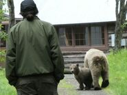 435 Holly and her spring cub in camp June 30, 2020 or prior NPS photo by Ranger Naomi Boak
