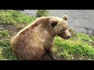 Bear 402's subadults 2020