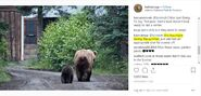 KNP&P INSTAGRAM 2018.11.09 w SUMMER 2018 PHOTO OF 132 w REMAINING SPRING CUB R TAYLOR 02