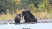 132 PIC 2018.09.15 w REMAINING SPRING CUB RATNA POSTED 2019.06.17 04