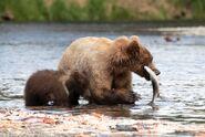 803 and 1 of 2 spring cubs July 17, 2020 photo by Lee Pastewka (aka RiverPA) .01