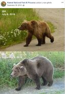 2014 FAT BEAR TUESDAY 2014.09.30 10.30 KNP&P FB POST 284 2014.07.06 vs 2014.09.06