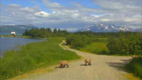 06.30.2018 - 451 and 3 Yearlings from Spit Road to the Spit by Brenda D-0