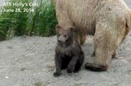 2014 FAT BEAR TUESDAY 2014.09.30 09.0 KNP&P FB POST 435 HOLLYs SPRING CUB aka 719 2014.06.28 PHOTO ONLY