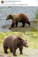 2014 FAT BEAR TUESDAY 2014.09.30 09.30 KNP&P FB POST 32 CHUNK 2014.06.30 vs 2014.09.07