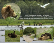 DinkeyCreekGirl's July 8, 2020 tribute to 803's spring cub .02