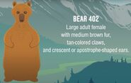 402 identification information from Mike Fitz's Meet Bear 402 video